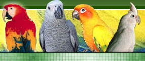 Parakeet Behavior