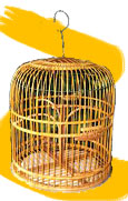 Cheap Bird Cages